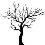 albero spoglio